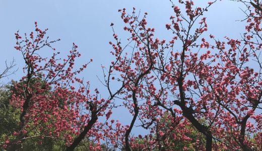 春の憂うつにアロマが役立つ?