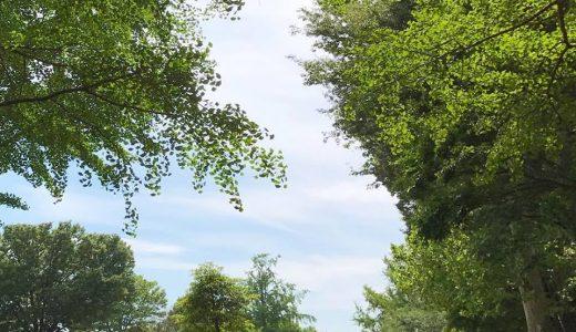 春のメンタル不調に役立つアロマ効果