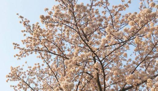 どんな香りでもアロマ効果は得られるの?
